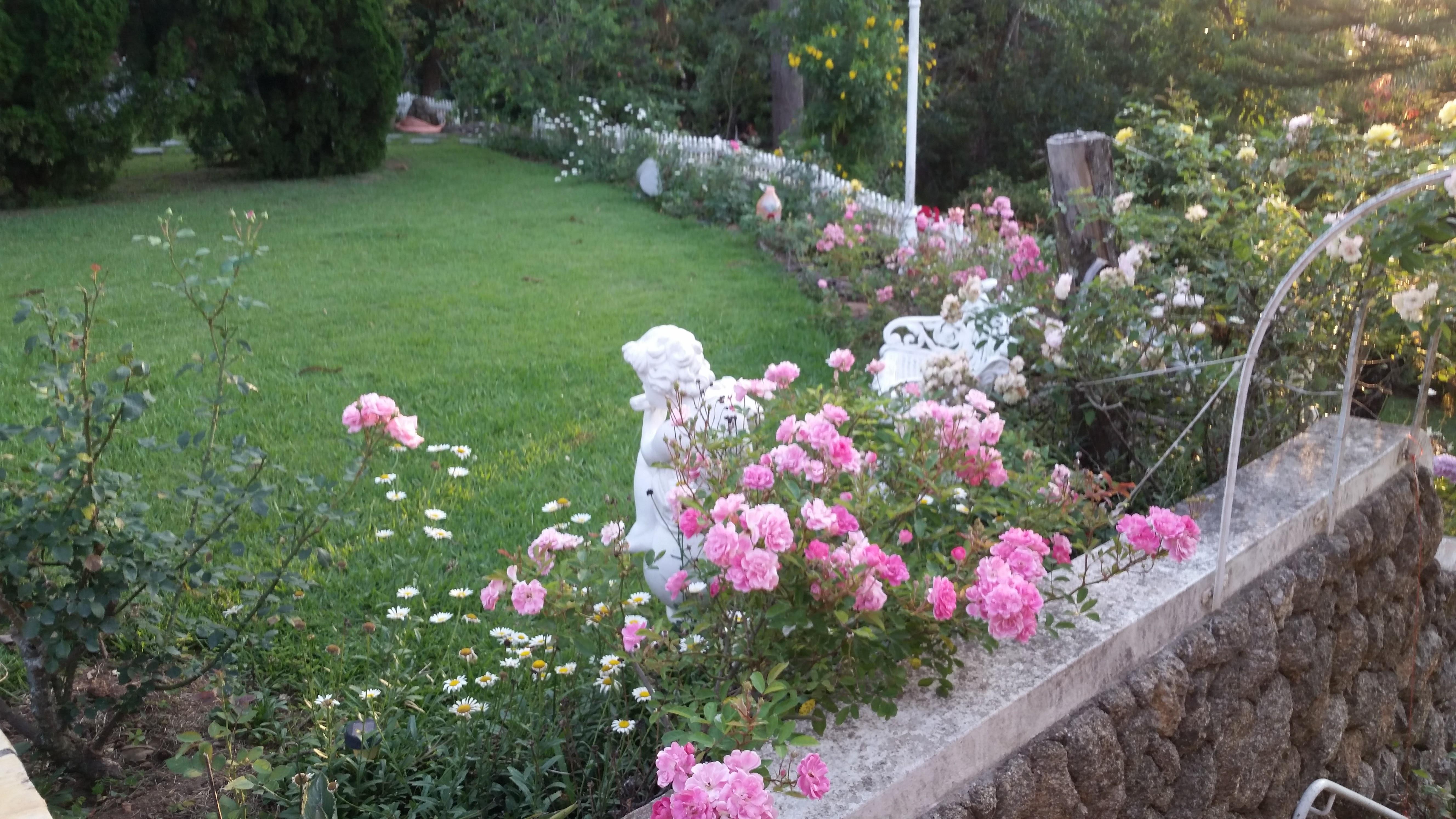 cuidar-de-roseiras